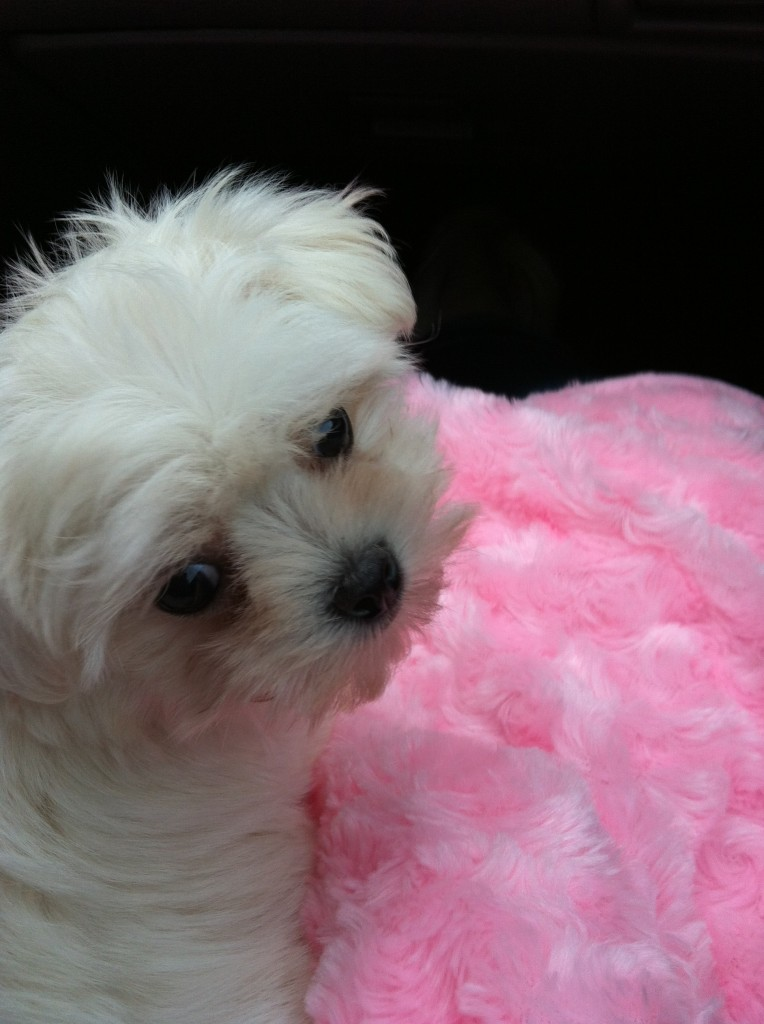 How to potty train your puppy in a few easy steps