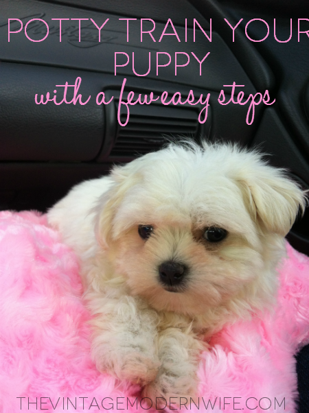 Potty Train Your Puppy with just a few easy steps!
