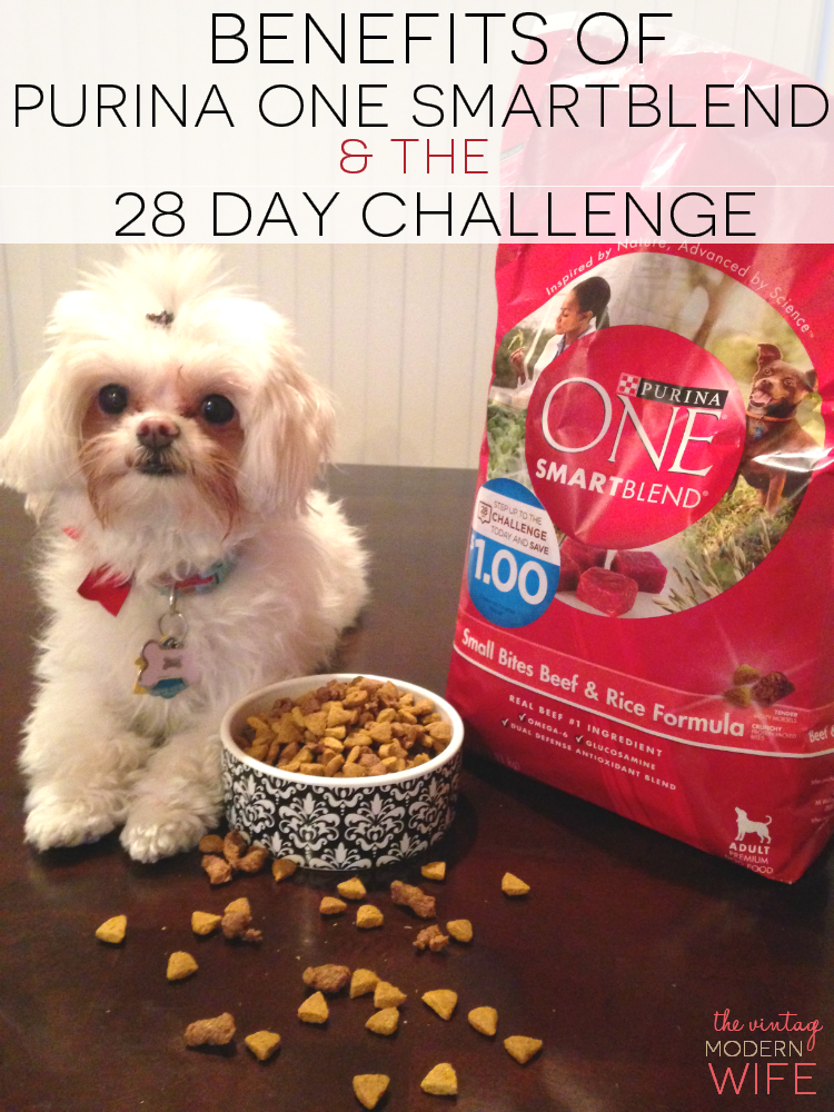 Thinking about switching your dog to another dog food? Check out the benefits of Purina One Smartblend and the 28 Day Challenge! You'll see a major difference in your dog! #ONEDifference #PMedia #ad
