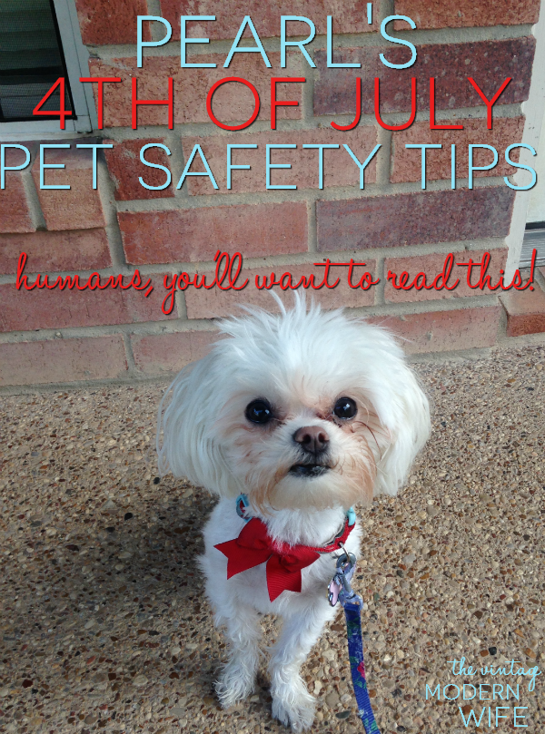 Hey humans! I hijacked my mommy's blog to bring you my 4th of July Pet Safety Tips! Read them, follow them, and pin them!