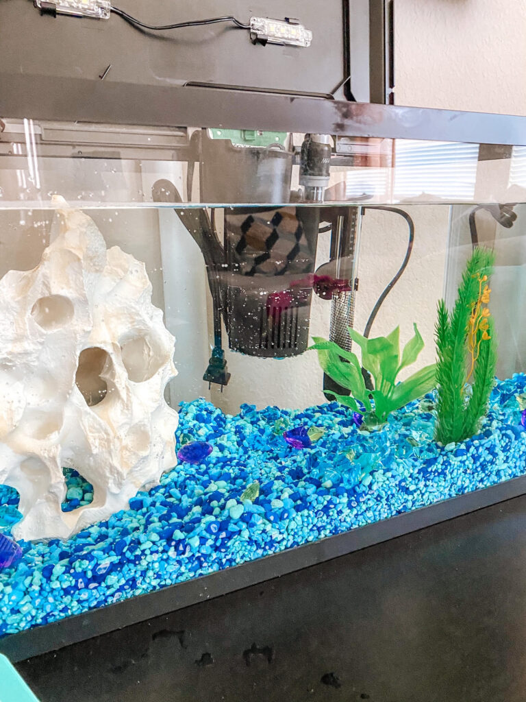 Looking to get the ultimate freshwater aquarium tips for kids and families? Look no further for your starter aquarium!