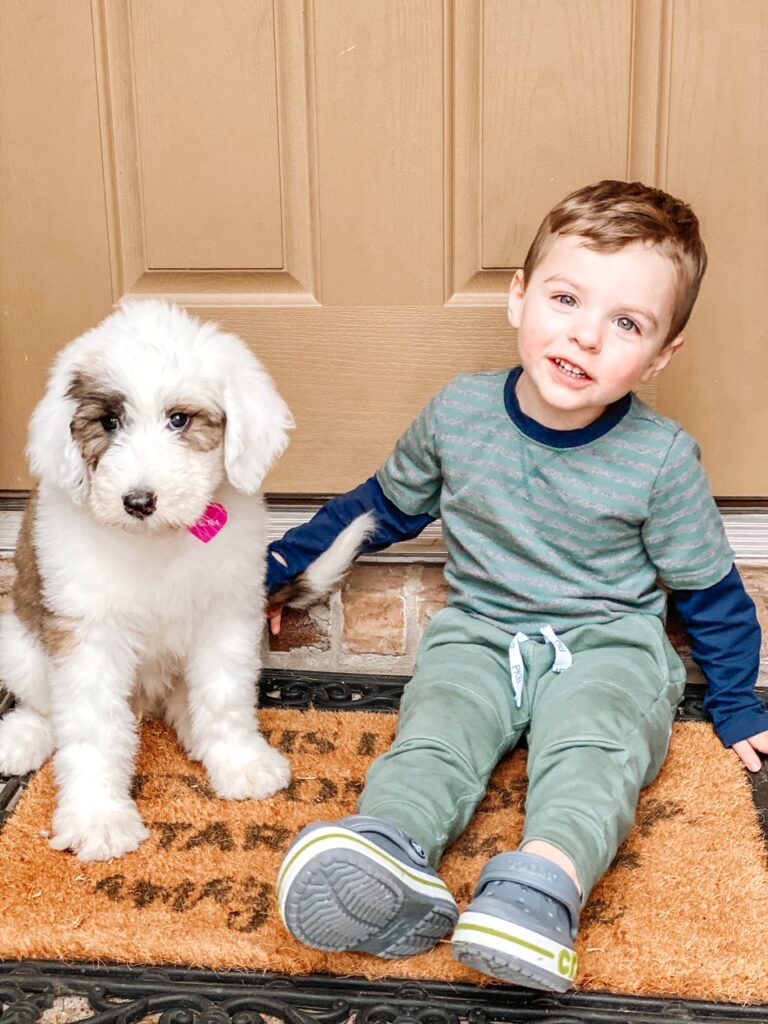 Trying to choose the best family dog? These tips are so helpful and really help narrow it down!