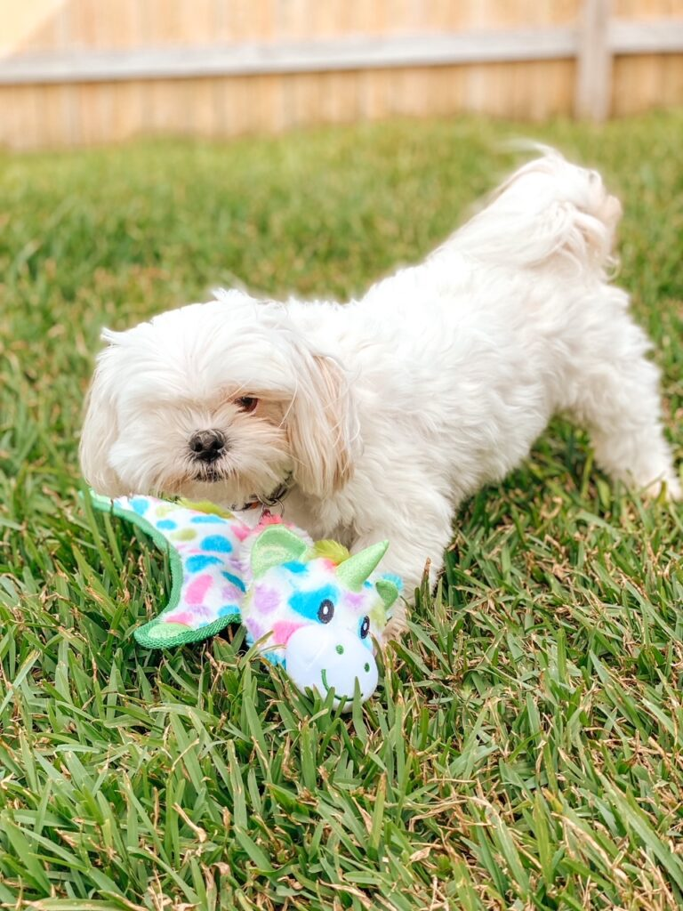 #ad Looking for some paw-some dog gifts? These are so much fun and gifts that every dog and owner will love! #BestForPetsBBxx #Petsies #petgifts #grufflove #eatplaylove #multipet #dog #Instadog #Pets #dogtoy #dogsofinstagram #SolidGoldPet