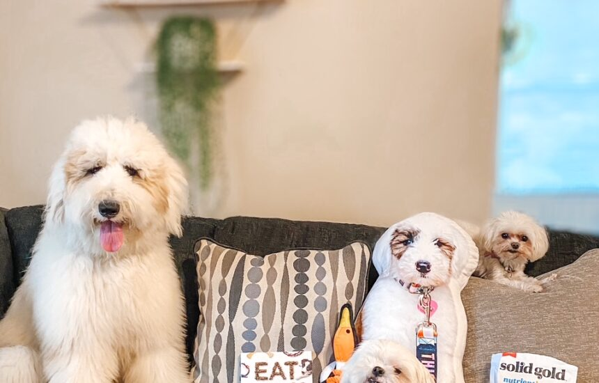 5 Paw-some Dog Gifts Your Dog Will Love
